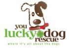 You Lucky Dog logo